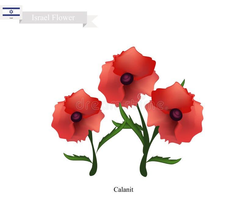 Calanitbloem, de Nationale Bloem van Israël stock illustratie
