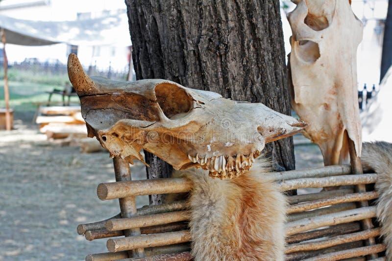 Calaveras y pieles animales en la valla fotos de archivo