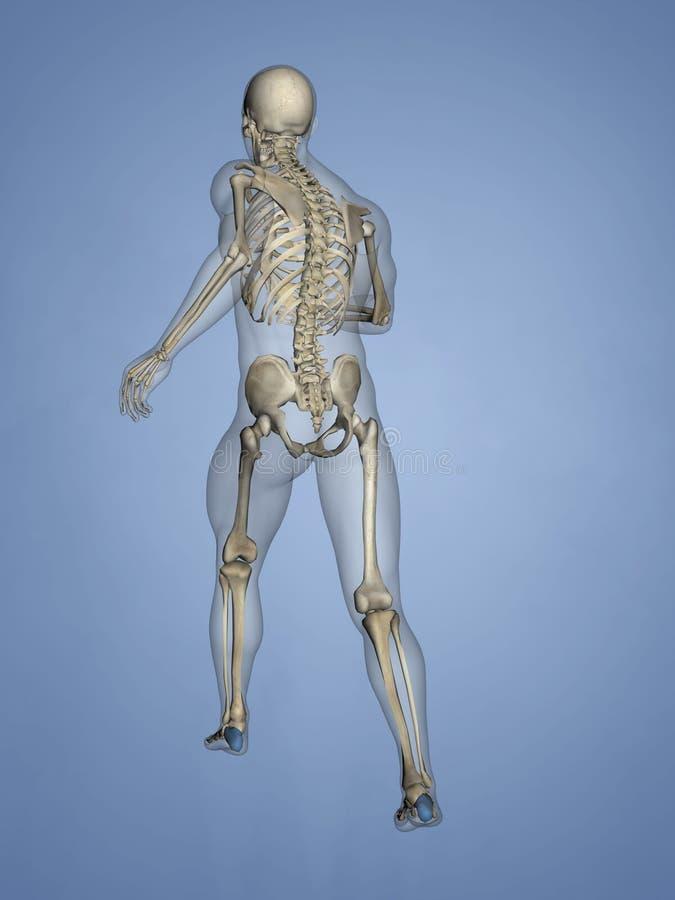 Calcaneus, 3D Model royalty free stock image