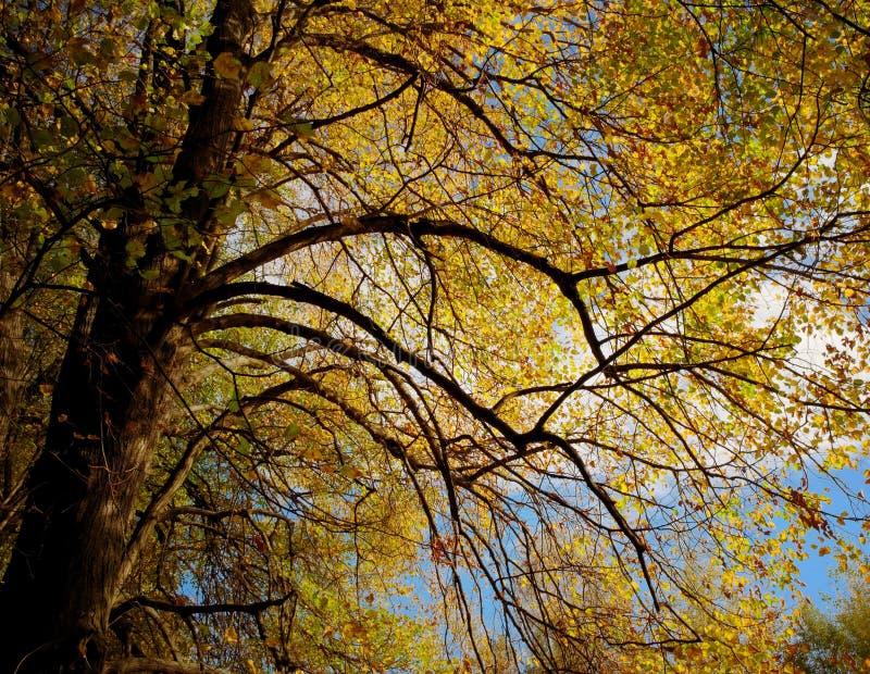 Calce di autunno fotografie stock