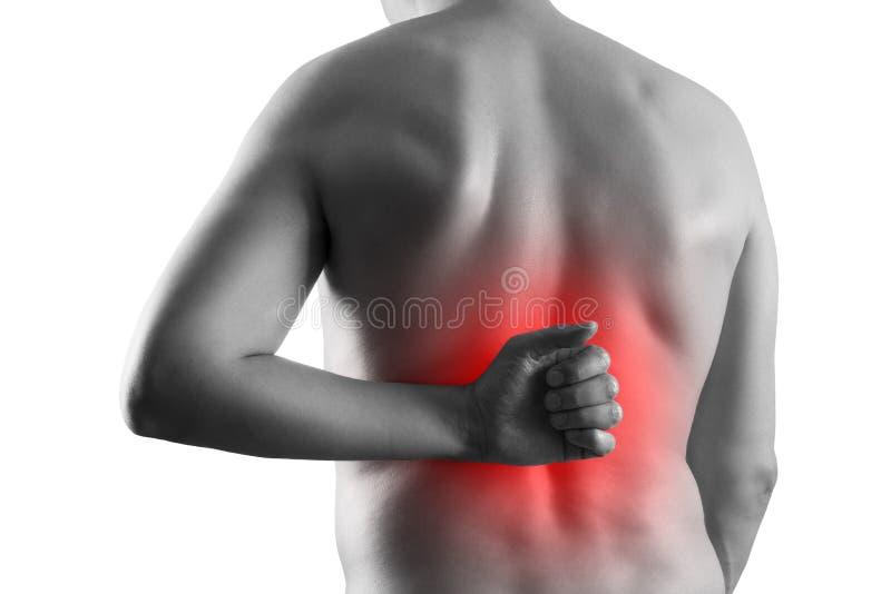 Calcoli renali, dolore nel corpo di un uomo isolato su fondo bianco, malattie croniche del concetto di sistema urinario fotografia stock libera da diritti