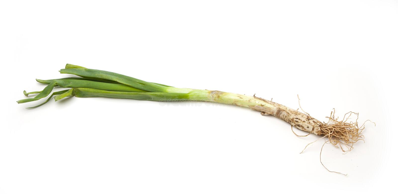 Calcot, wiosny cebula od Hiszpania obraz stock