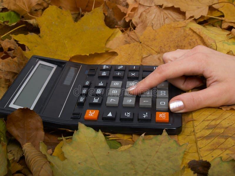 A calculadora nas folhas fotos de stock