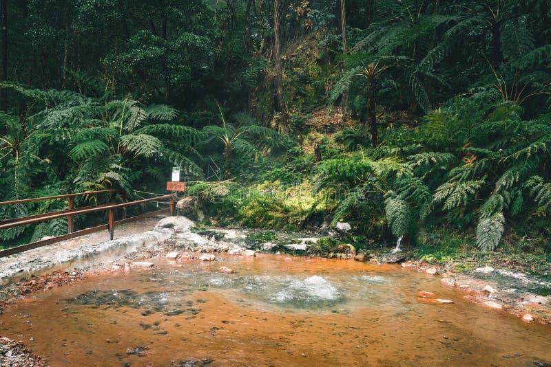 Caldeira Velha pöl med koka vatten från geoen termiska Hot Springs, Sao Miguel, Azores fotografering för bildbyråer