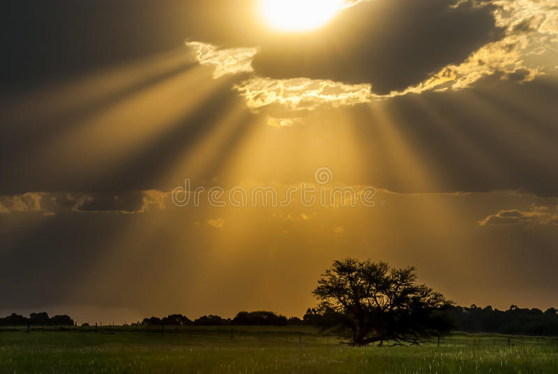 Calden Pampas landscape. La Pampa Argentina royalty free stock photography