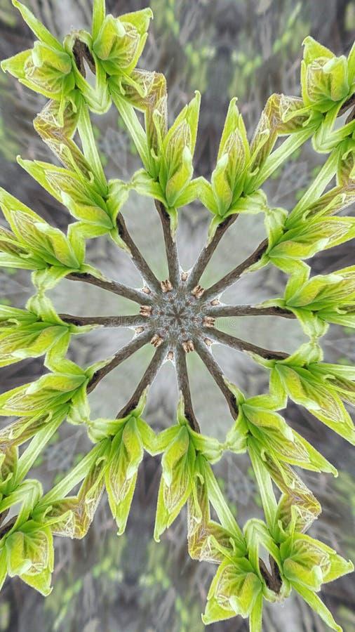Caleidoscópio feito no verde fotos de stock