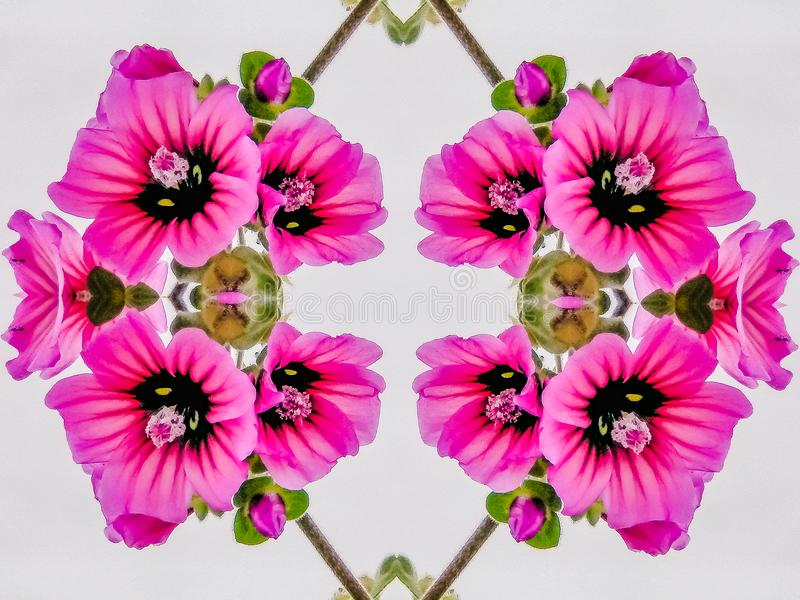 Caleidoscopio geométrico de flores rosadas brillantes imagen de archivo