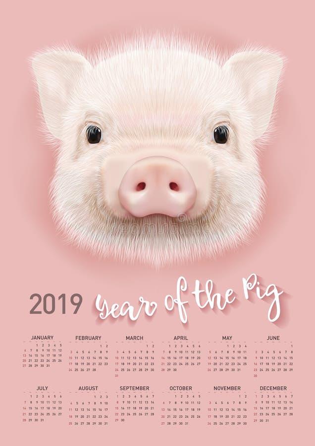 Calendário do porco para 2019 Molde editável do vetor com conceito Símbolo do ano no calendário chinês ilustração stock