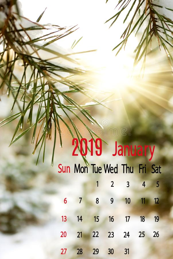 calendar for January 2019 on spruce branch background close-up royalty free stock photography