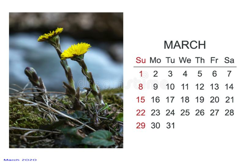 Calendar with March 2020. With pictures. Calendar with March 2020. Natural elements. frozen green leaves. New month royalty free stock photography
