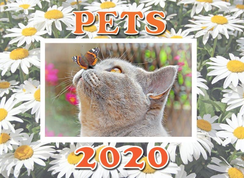 Calendrier des nouvelles années 2020 animaux de compagnie pedigree animaux planificateur image libre de droits