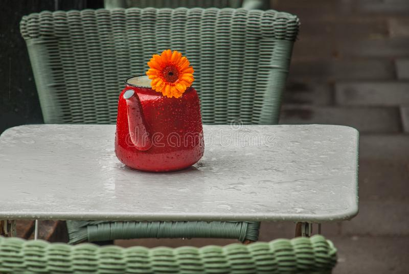 Calendula Flowers in orange teakettle on the white table. After rainy royalty free stock images