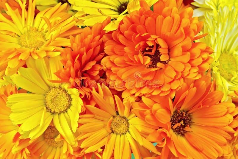 Calendula flowers yellow and orange bouquet royalty free stock photos
