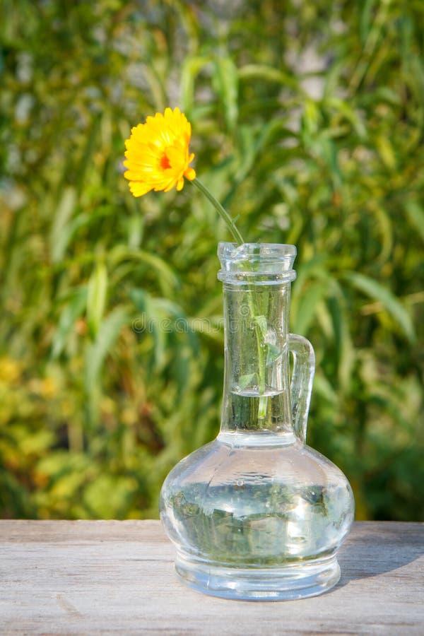 Calendula kwiat z trzonem w szklanej kolbie na drewnianych deskach zdjęcie stock