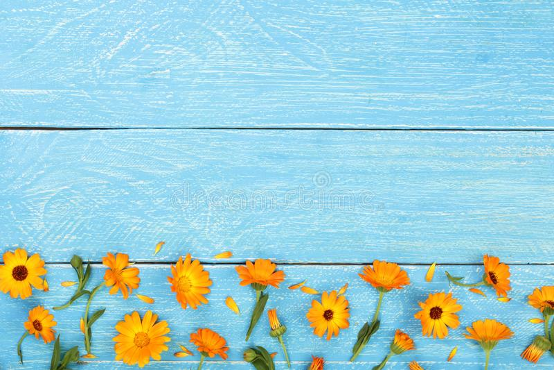 Calendula Marigold λουλούδι στο μπλε ξύλινο υπόβαθρο με το διάστημα αντιγράφων για το κείμενό σας Τοπ όψη στοκ φωτογραφία με δικαίωμα ελεύθερης χρήσης