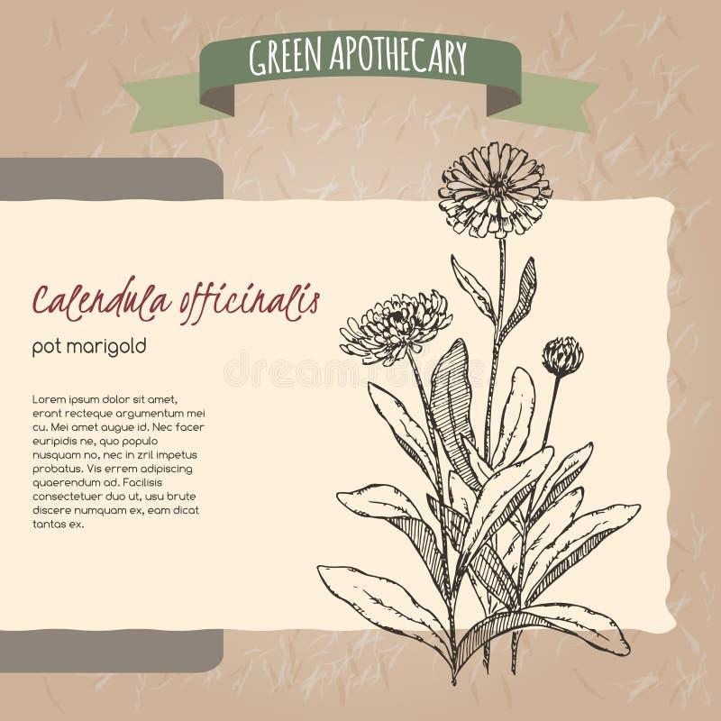 Calendula officinalis aka pot marigold sketch vector illustration