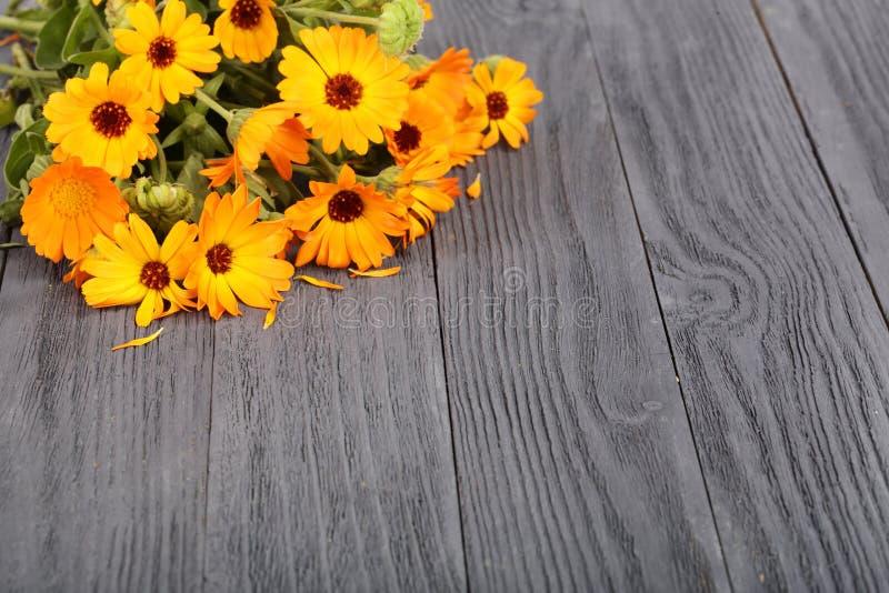 Calendula Officinalis Flor de la maravilla con la hoja en fondo de madera negro con el espacio de la copia para su texto fotos de archivo libres de regalías