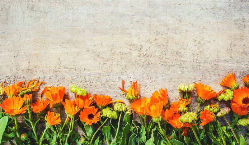Calendula officinalis na drewnianym tle zdjęcia royalty free