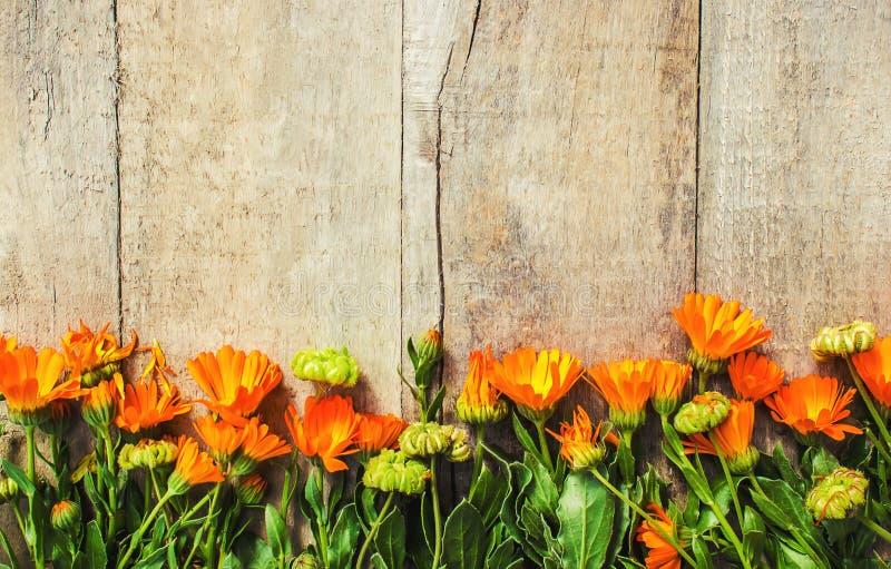 Calendula officinalis na drewnianym tle zdjęcie stock