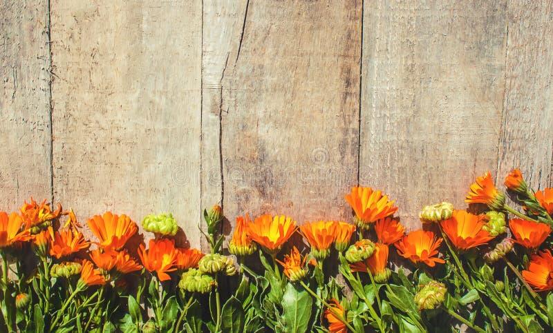Calendula officinalis na drewnianym tle fotografia royalty free