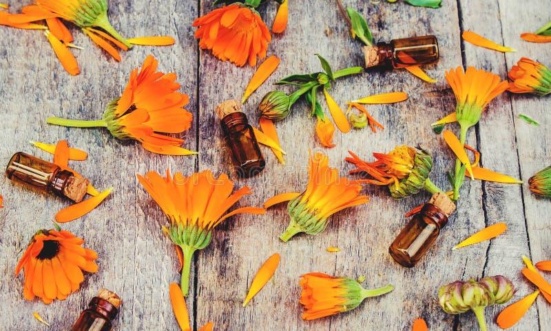 Calendula officinalis na drewnianym tle obrazy stock