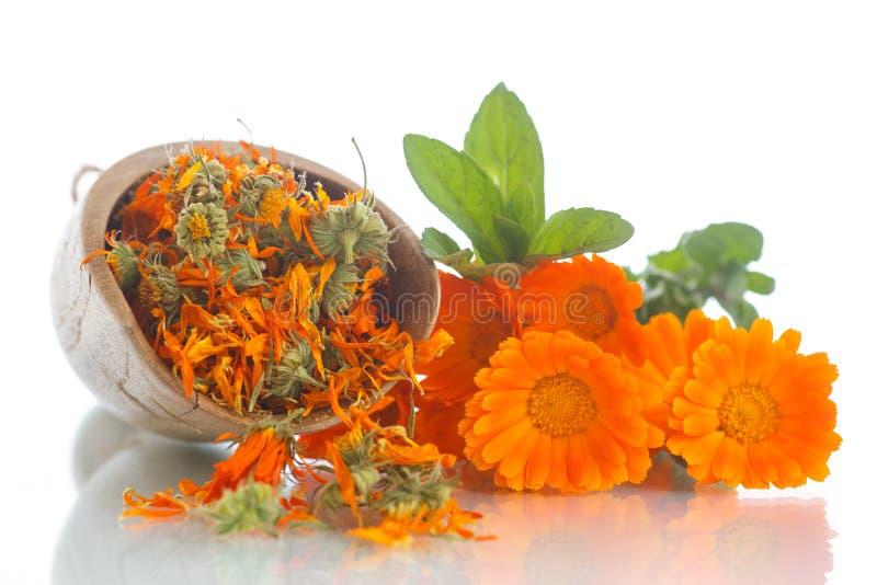 Download Calendula secca immagine stock. Immagine di nave, fiori - 56887307