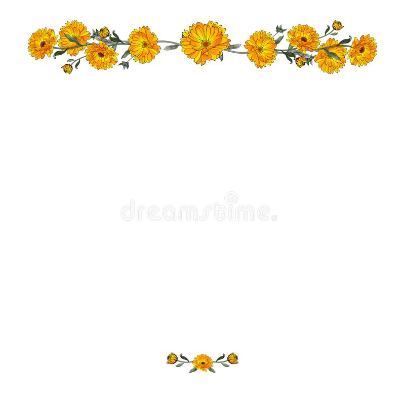 Free Calendula. Vector Border With Yellow Flowers Royalty Free Stock Image - 191980346
