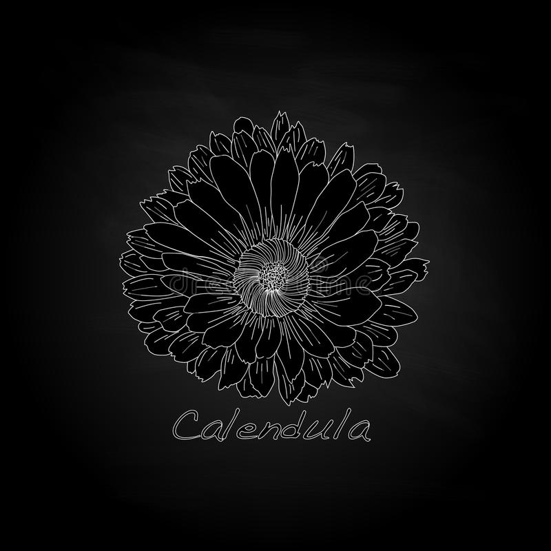 Download Calendula Vector Illustration Stock Vector - Image: 83714708
