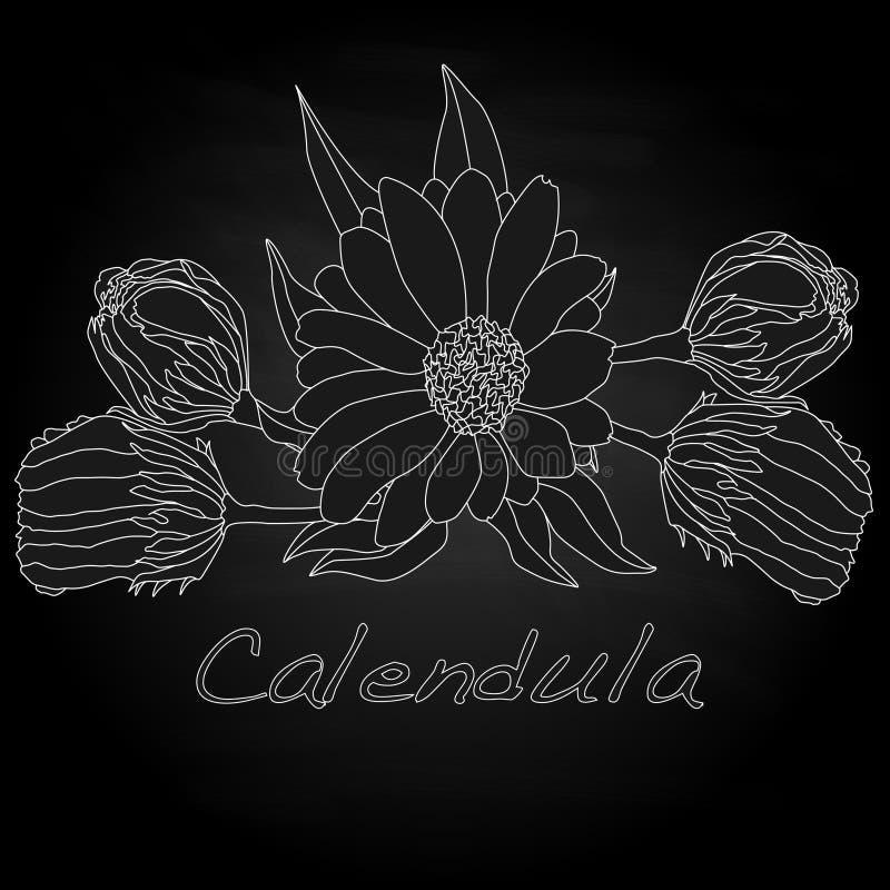 Download Calendula Vector Illustration Stock Vector - Image: 83715078