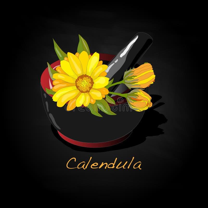 Download Calendula Vector Illustration Stock Vector - Image: 83715038