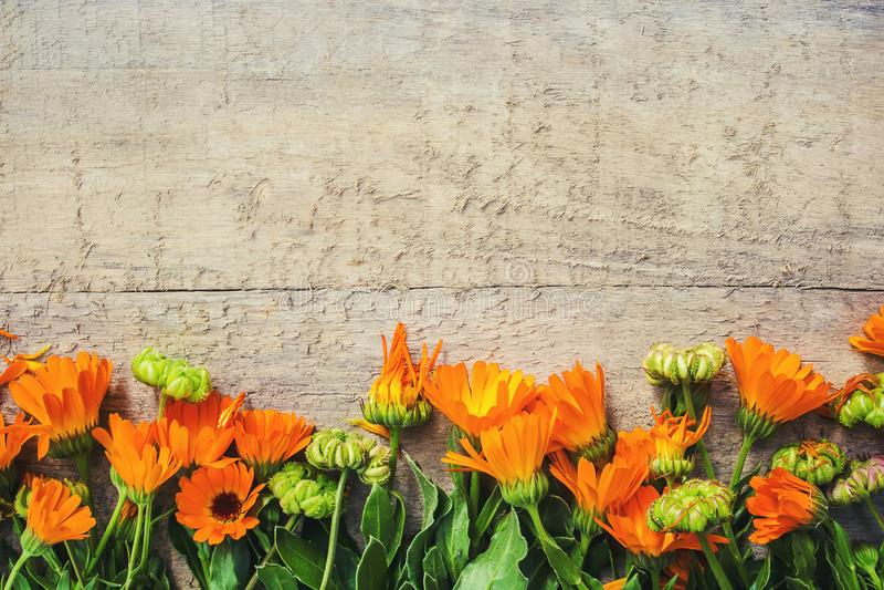 Calendulaofficinalis på träbakgrund royaltyfria foton