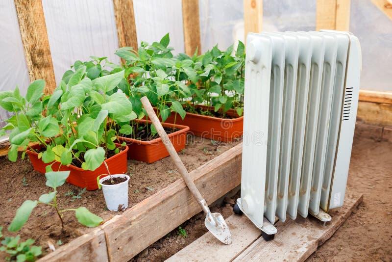 Calentador de aceite eléctrico en invernadero con los almácigos de plantas, plantando la primavera temprana durante el tiempo frí imagenes de archivo