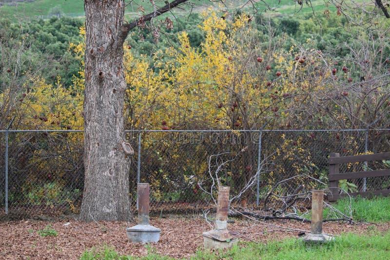 Calentadores de la arboleda y arbustos anaranjados viejos de la granada imagen de archivo libre de regalías