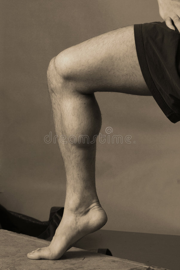 Calf Muscle. Male model with hairy legs and a prominent calf muscle stock photography