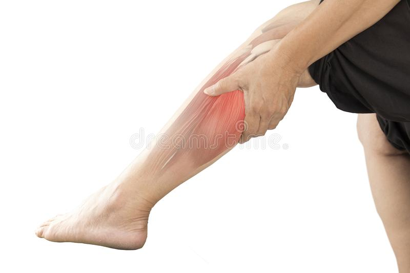 Calf muscle pain. White background calf pain stock image