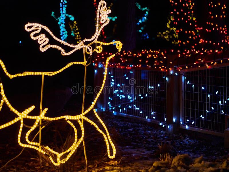 CALGARY KANADA - DECEMBER 12, 2014 Älg av Led den ljusCalgary zoo Zoolights i Calgary, Alberta Zoolights är en händelse som kör royaltyfria bilder