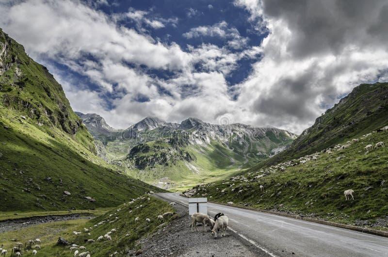 Calha da estrada as montanhas de Pyrenees fotos de stock royalty free