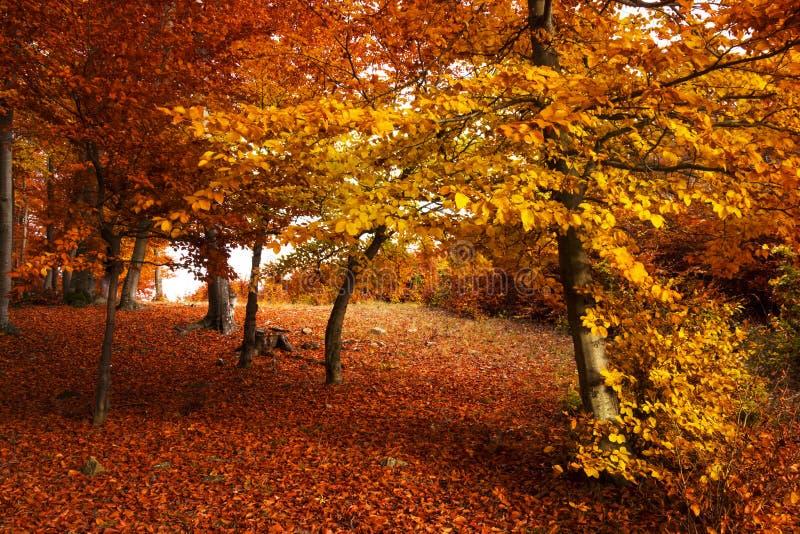 Calha da fuga uma floresta do outono imagens de stock royalty free