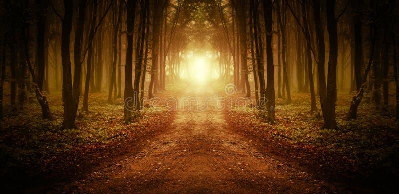 Calha do trajeto uma floresta mágica no nascer do sol fotografia de stock