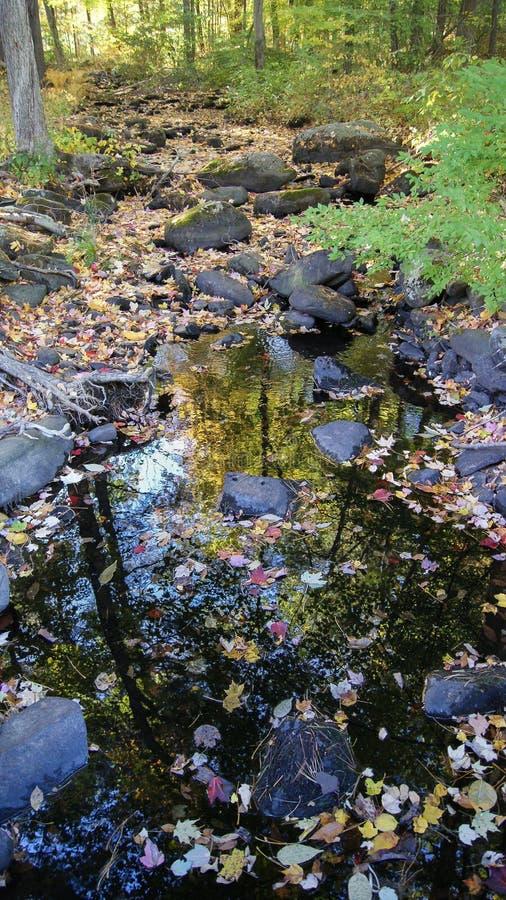 Calha pequena do cruzamento de rio a floresta durante o começo do outono do outono em Massachusetts, Nova Inglaterra imagem de stock royalty free