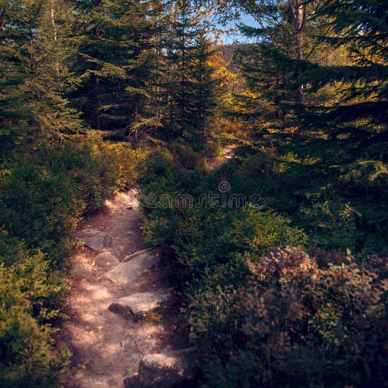 Calha principal da fuga de caminhada Forest National Park boêmio bonito Conceito Trekking e de aventura imagens de stock