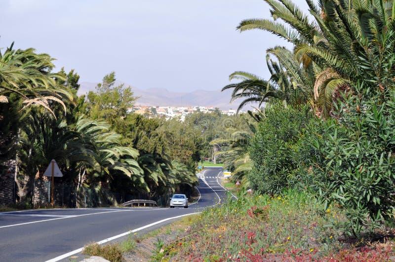 A calha voando da estrada os palmtrees foto de stock royalty free