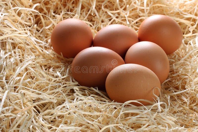 Cali Brown jajka w słomie obraz stock