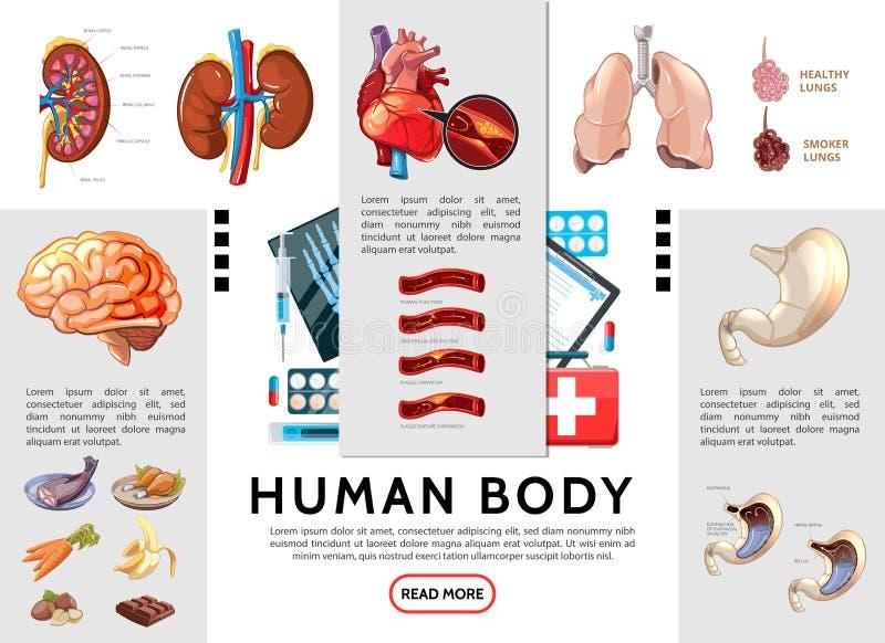 Calibre d'Infographic de corps humain de bande dessinée illustration de vecteur