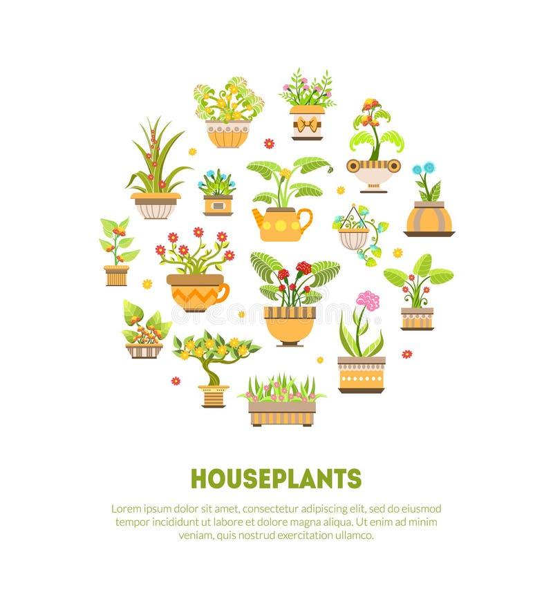 Calibre de bannière de plantes d'intérieur, usines de floraison de Chambre dans l'illustration de vecteur de pots de fleur illustration de vecteur