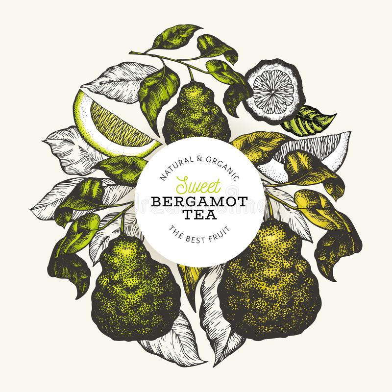 Calibre de conception de branche de bergamote Logo de chaux de Kaffir Illustration tir?e par la main de fruit de vecteur Fond gra illustration stock
