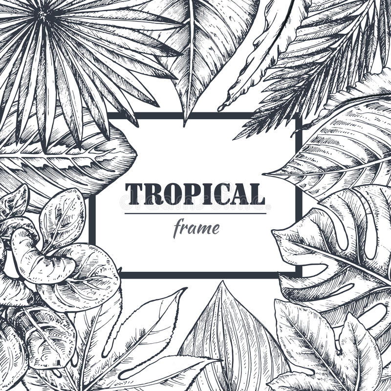 Calibre de vecteur avec le cadre des plantes tropicales tirées par la main illustration de vecteur