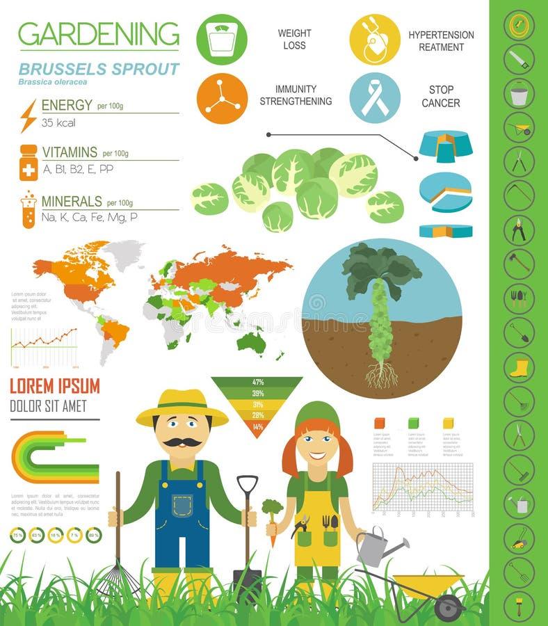 Calibre graphique de caractéristiques salutaires de chou de chou de bruxelles Jardinage, agriculture infographic, comment il se d illustration de vecteur