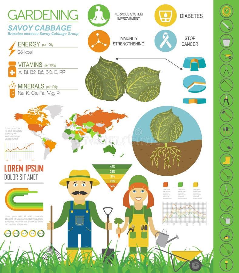 Calibre graphique de caractéristiques salutaires de chou Jardinage, agriculture infographic, comment il se développe Conception p illustration libre de droits