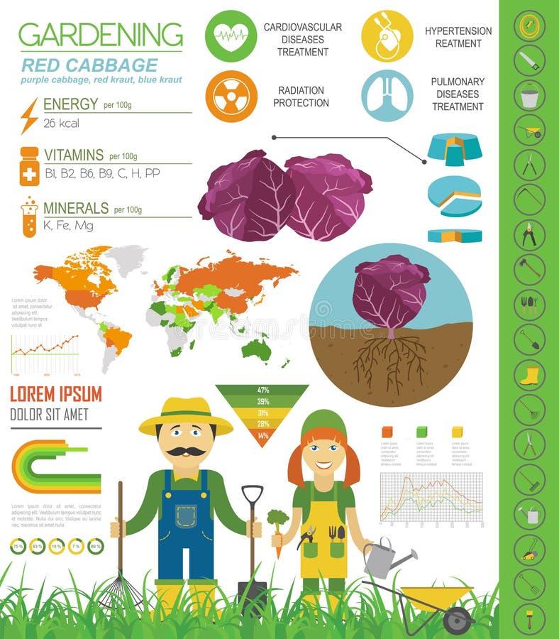 Calibre graphique de caractéristiques salutaires de chou rouge Jardinage, agriculture infographic, comment il se développe Concep illustration de vecteur